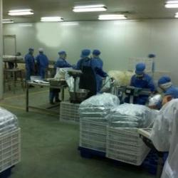 xingtai senyang food import & export trade co.,ltd