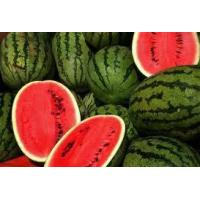 Quality Fresh Water Melons for sale