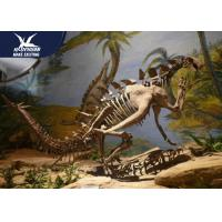 Buy cheap Museum Exhibition Dinosaur Fossil Replicas Realistic Bone / Dinosaur Skeleton from wholesalers