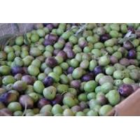 Buy cheap Fresh Olives product
