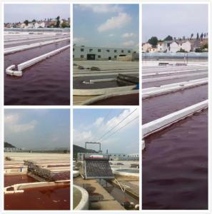 Buy cheap Natural Astaxanthin  5% UV Haematococcus Pluvialis Oil Dark Red Powder product