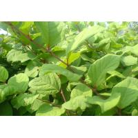 Buy cheap Resveratrol from wholesalers