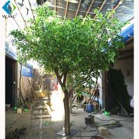 Buy cheap Wood Trunk Decorative Ficus Tree , 2.5m Height Artificial Outdoor Trees product