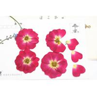 Buy cheap Red Rose Real Pressed Flowers Diameter 3 CM For Valentine'S Day Holidays product