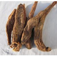 Quality Wild whole dried Herba Cistanches from Cistanche deserticola Ma for sale