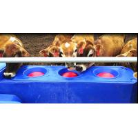 China High quality pasture  4m Blue Thermo Six-Hole drinking Waterer  for animals  (with cover and balls) made of LLDPE wholesale