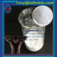 China Local Anethetic Drugs High Purity 99.5% Tetracaine White Fine Powder for Local Anaesthesia wholesale