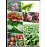 Buy cheap seaweed liquid mushy irrigation fertilizer from wholesalers