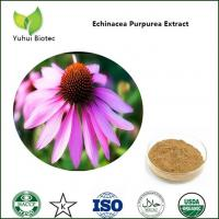 China echinacea extract,echinacea purpurea extract,echinacea herb extract,cichoric acid on sale