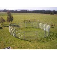 China 26 Panel Horse Yard Panels For Sale Inc Gate, Round Cattle Fences, Corral 18m Diameter on sale