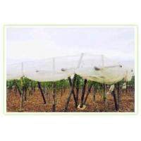 Buy cheap Bird Netting,Insect Netting, from wholesalers