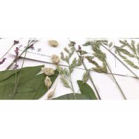 Buy cheap Original Wild Grass Weed Large Pressed Flowers For Aroma Wax Candles product