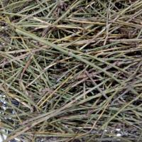 Quality Dried EPHEDRA HERB segments natural Ephedrae herba whole parts for traditional for sale