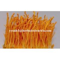 Buy cheap Cordyceps Sinensis Extract, Кордицепс Sinensis Экстракт, Enhance immunity, Рейши Экстракт гриба product