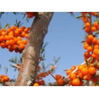 Buy cheap Natural Oil-soluble sea buckthorn extract yellow pigment product