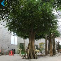 Buy cheap Umbrella Shape Faux Ficus Tree For Indoor Decoration 5-10 Years Life Time product