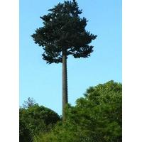 Buy cheap Palm Tree Towers , Palm Tree Cell Phone Towers Disguised Pine Tree Cell Tower product