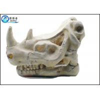 Freshwater fish tank decoration ideas quality freshwater for Fish tank skull decoration