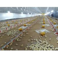 China Prefabricated Steel Structure Broiler House for Poultry Shed Cage Layer Chicken House china Broiler Chicken House on sale