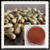 China 100% purity Grape seed extract wholesale