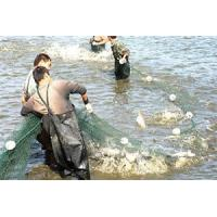 Buy cheap Polyethylene Fishing Net, Commercial Fishing Nets product
