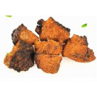 Buy cheap Inonotus obliquus.Chaga Mushrooms,Hua he kong jun,herb medicine,wild mushrooms,organic food,anti tumor and cancer product