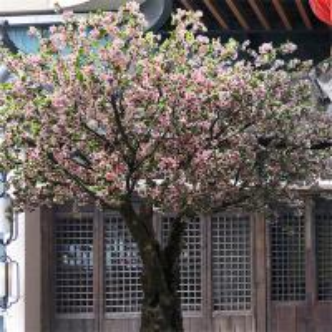 Buy cheap Romantic Big Artificial Blossom Tree Sakura Flower Supermarket Decoration product