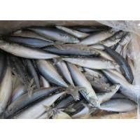 New landing grade a quality frozen whole round pacific for Fish meal for sale
