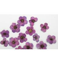Buy cheap Purple Colour Narcissus Dried Flower Nail Art For DIY Nail Accessories product