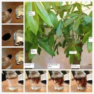 Buy cheap alginic acid fertilizer use product