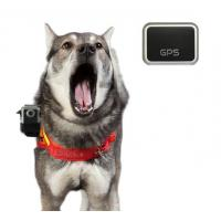 China Dog Camera Vest with 16MP HD 1080p GPS Waterproof Stealth Camera (HDV-560) on sale