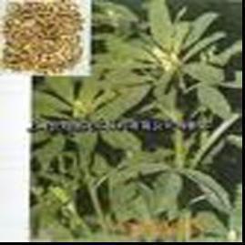 Buy cheap 植物のエキスの精液の Trigonellea のエキス product