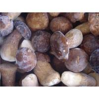 China Supply wild mushroom on sale