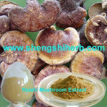 how to make reishi mushroom extract