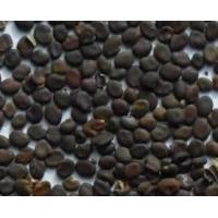 Buy cheap Top quality Astragalus seed from Astragalus membranaceus fruits for sowing product