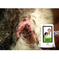 China High Dose Veterinary Laser Equipment Pain Free , Laser Therapy Machine For Dogs on sale