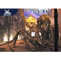 Buy cheap Artificial Fiberglass Dinosaur Fossils Statues / Natural History Museum Dinosaur from wholesalers