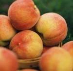 Buy cheap Fresh Peaches product