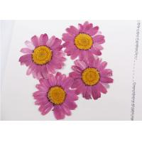Buy cheap Dye Absorption DIY Pressed Flowers Chrysanthemum For Washroom Decoration product