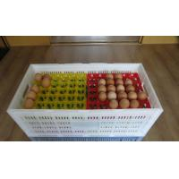 Buy cheap High quality plastic egg tray for incubator or transferring product