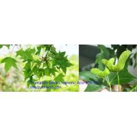 Buy cheap Acer Truncatum Plant Extract Nervonic Acid 5% GC yellow brown fine powder China | A Clover Nutrition Inc from wholesalers