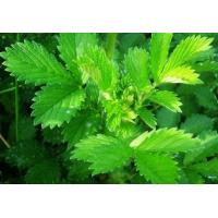 Buy cheap 100% natural Hairyvein Agrimonia Herb Extract Powder 10:1 product