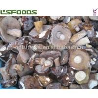 China frozen boletus edulis on sale