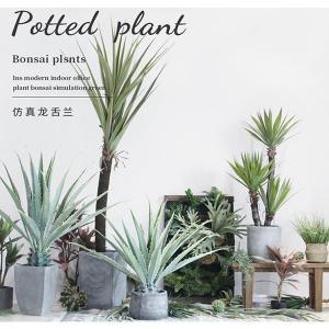 Buy cheap ISO Desert Snake Plant Artificial Bonsai Tree Tiger Piran Aloe Sansevieria Seeds product