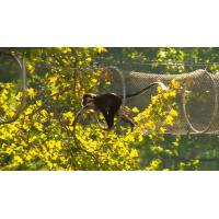 Buy cheap Professional Animal Enclosure Mesh / Animal Cage Wire Mesh For Small Mammals product