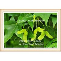 Buy cheap Acer Truncatum Plant Extract Nervonic Acid 90%-98% GC China | A Clover Nutrition Inc from wholesalers