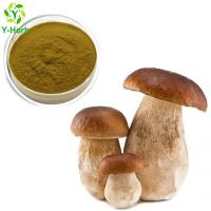 China 10%-50% Natural Boletus Extract Porcini Powder on sale