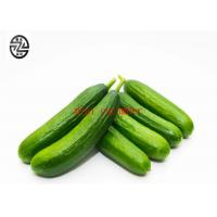 Buy cheap Anti - Intoxication Cucumber Cucumis Sativus Preventing Kidney Stones product
