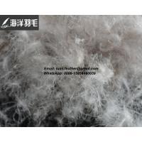 China High quality 5%~95% Grey Duck down and feather