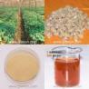 Buy cheap 100% Natural American Ginseng Saponins from wholesalers